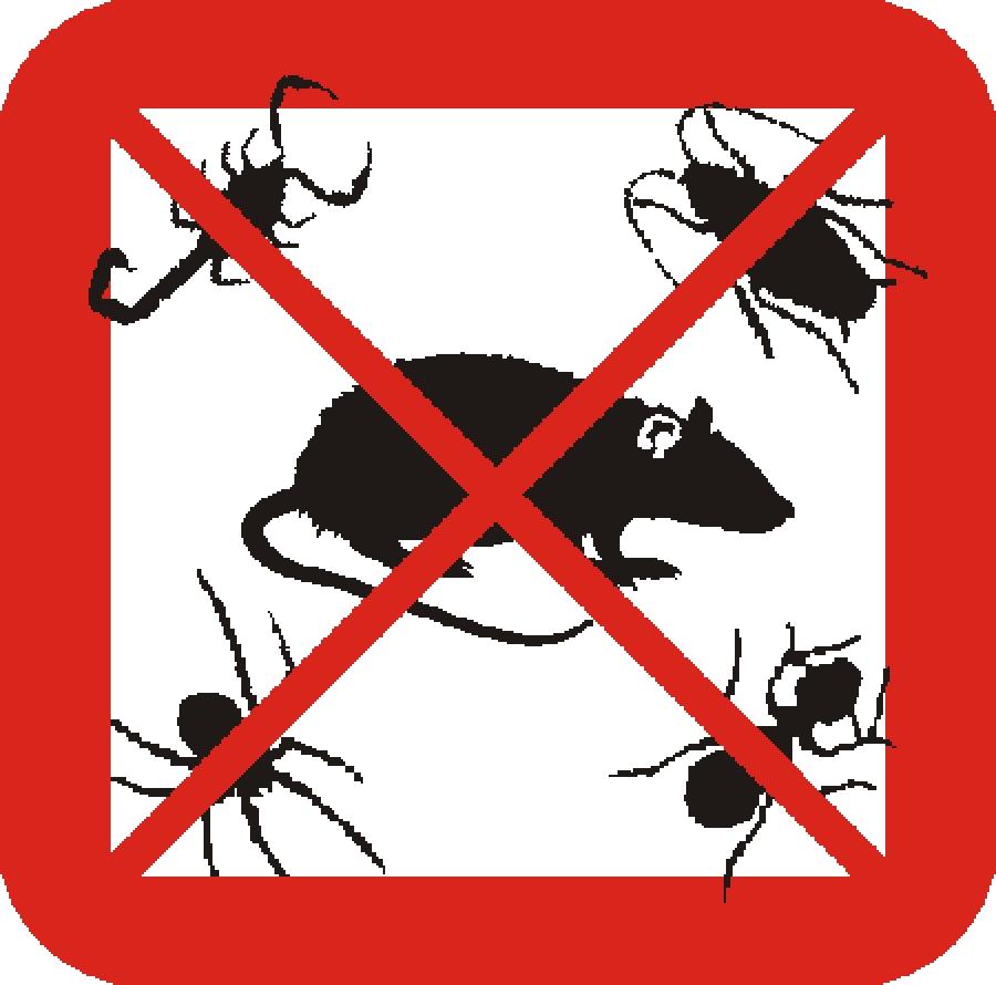 Importancia del control de plagas en granada for Control de plagas sevilla
