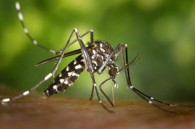 Los mosquitos control de plagas en granada - Mosquiteras granada ...