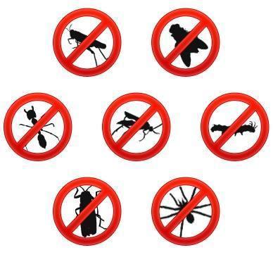 Consejos para evitar plagas de cucarachas en casa - Eliminar insectos en casa ...