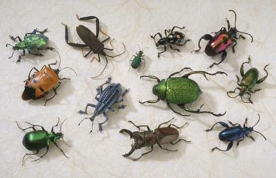 Tipos de plagas de jard n control de plagas for Insectos del jardin