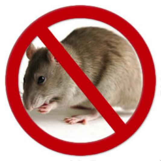 Empresas de desratizacion en granada - Como eliminar ratas en casa ...