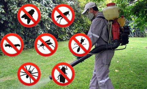 Es importante la experiencia para el control de plagas for Control de plagas badajoz