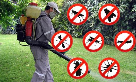 Control de Insectos