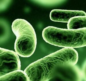 Control de Legionella en Granada: Arplagas