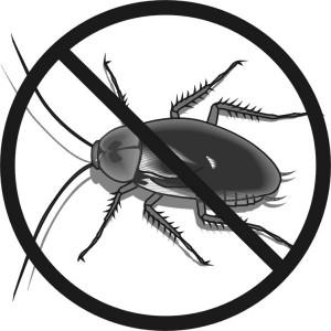 eliminacion-de-cucarachas