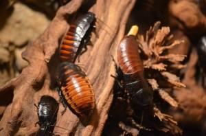 Eliminar cucarachas en Granada