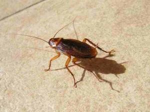 evitar plagas de cucarachas